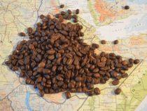 Afrikanische Kaffeebauern leiden unter Fairtrade- und Bio-Siegeln