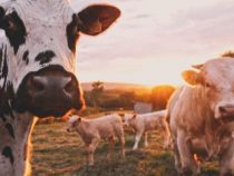 Mehr Geld für Bauern, weniger für Agrarkonzerne