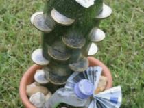 Der Geld-Kaktus