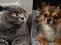 Was kostet dich ein Haustier?