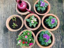 Wenn der Frühlingsanfang das Glück wachsen lässt